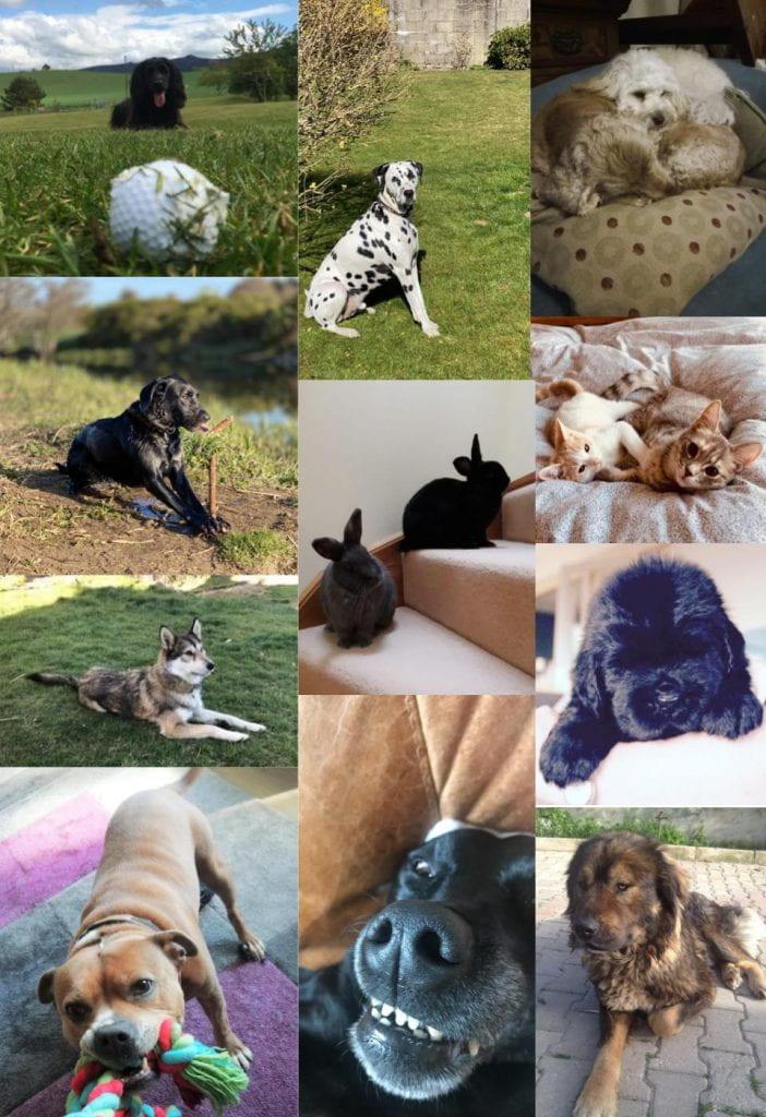 Staff Pets 2
